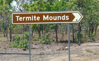 The termite mounds on the Arnhem Highway from Darwin to Kakadu National Park in Northern Territory Australia
