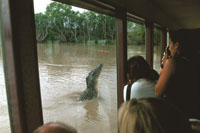 Jumping croc cruise
